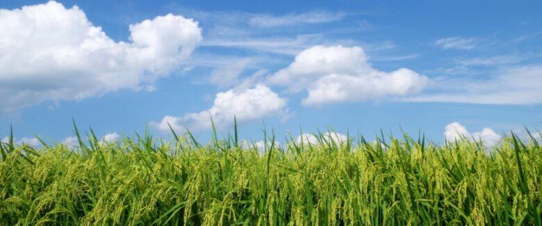 稲穂と空のイメージ画像