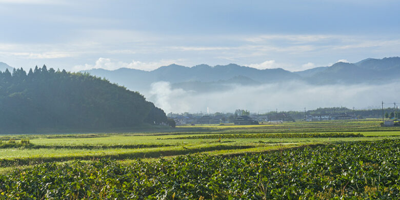 黒大豆畑の風景写真