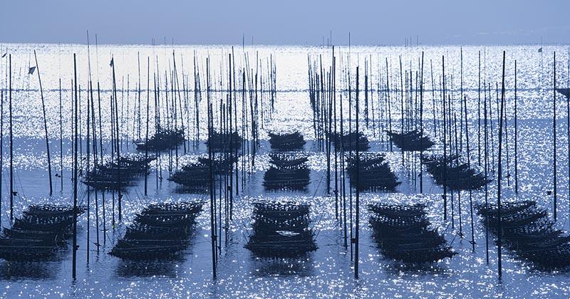 海苔の養殖風景:有明海(イメージ画像)