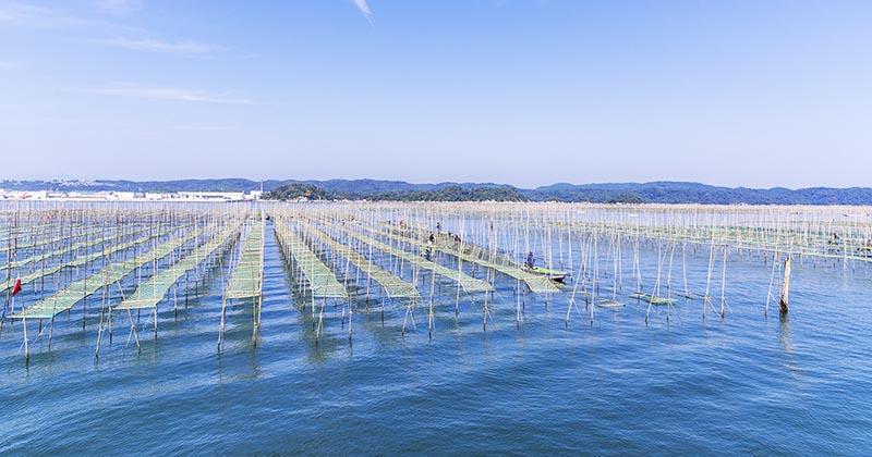 海苔の養殖風景(イメージ画像)
