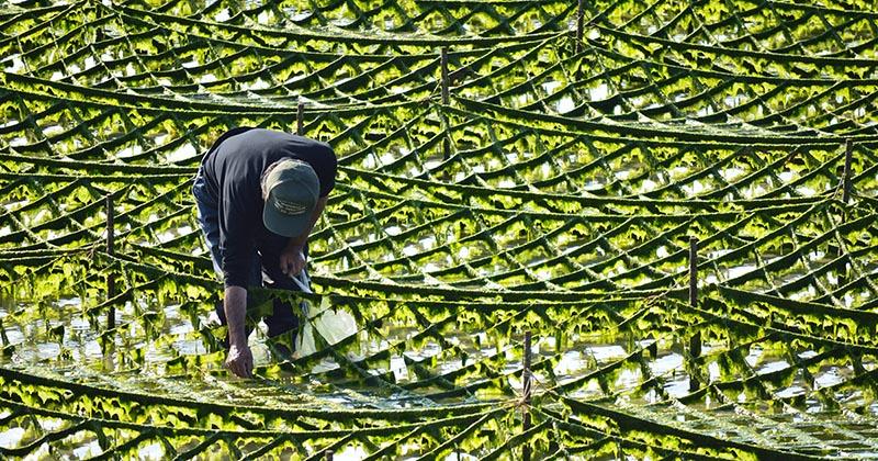 藻類の養殖:風景写真(イメージ画像)